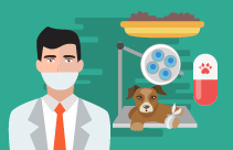 The Role of the VN SQP in Small Animal Practice